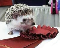 Hedgehog Shows